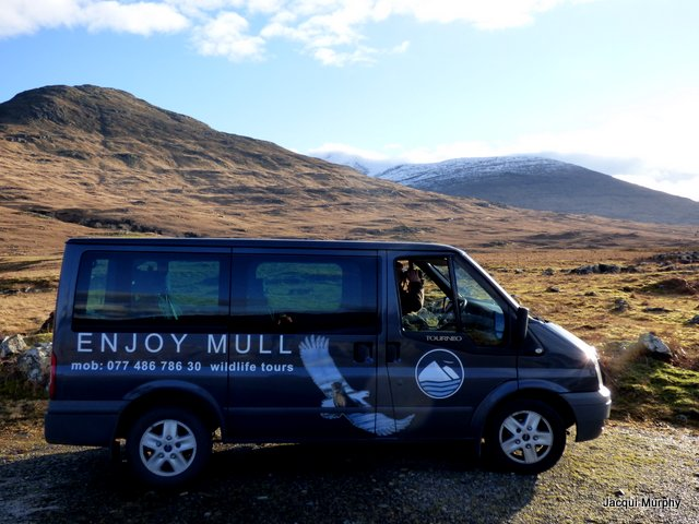 enjoy mull